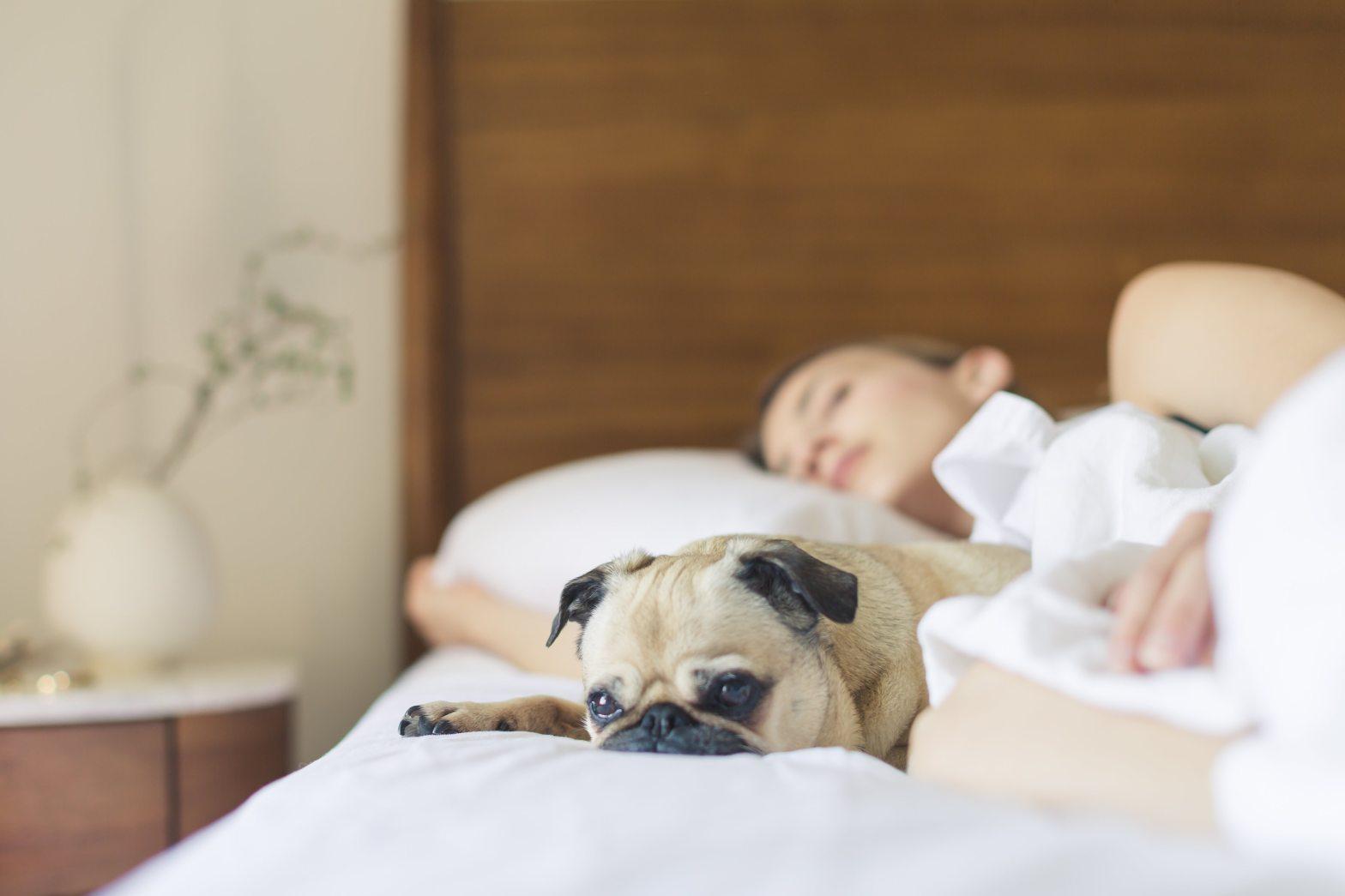 sleep article six reasons for sleep